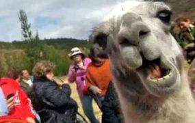 Food Tour-The Chevere Llama